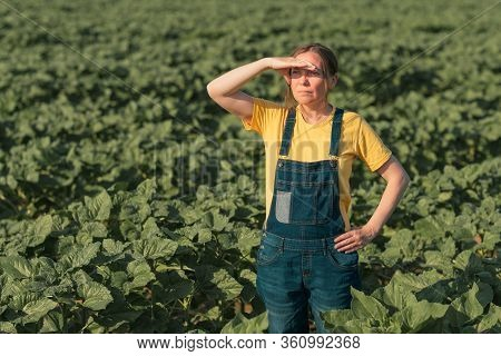 Sunflower Farmer Posing In Field. Female Agronomist Is Standing In Young Helianthus Annuus Plantatio