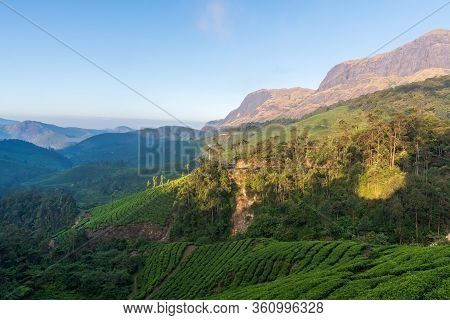 The Gorgeous Tea Estates And The Looming Hills In The Beautiful Town Of Munnar In Kerala, India. The