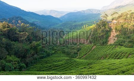 View Of The Lush Green Tea Estates Of Munnar In The Morning Light. A View Of The Beautiful Valley.