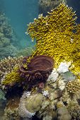 coral reef with fire coral and sea sponge poster