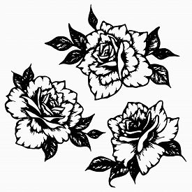 Rose With Leaves Set. Hand Drawn Black Ink Beautiful Graphic Flower For Decoration Of Frames, Tattoo