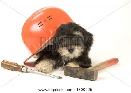 Puppy And Hard Hat And Tools