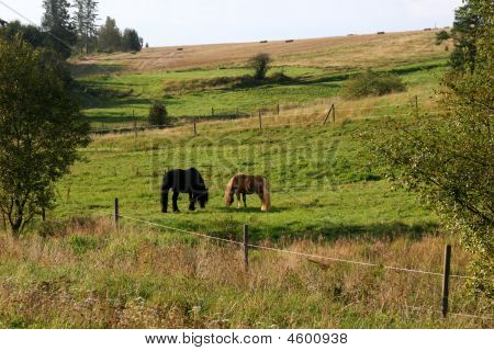 Two Horses On A Meadow