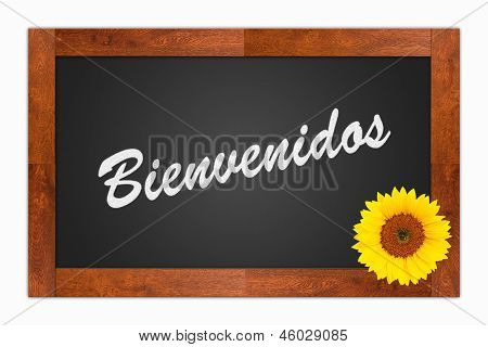 """""""Bienvenidos"""" (Welcome) written in chalk on a blank blackboard with sunflower on wooden frame isolated on white background poster"""