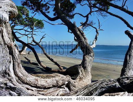 Fallen tree at a beach