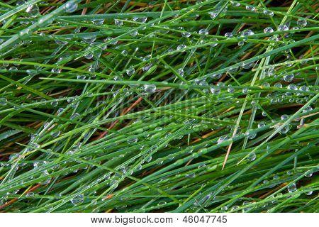 wet grass blades