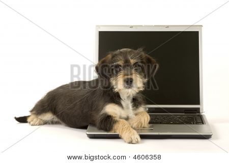Cute Puppies Brothers And A Laptop Isolated
