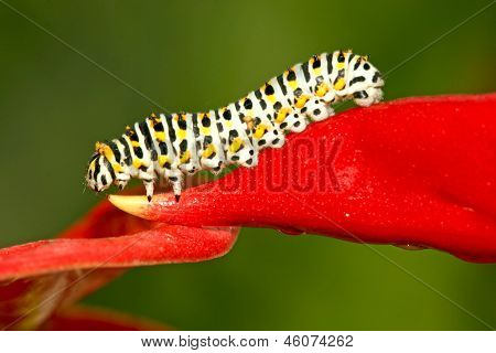 Insects On Colorful Plant In The Wild