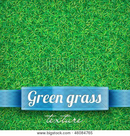 Green grass background. Grass texture. Green grass field