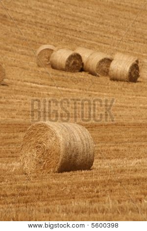 success in farming business