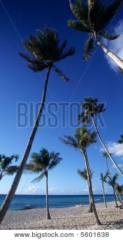 Bayahibe Palmtrees Beach - Dominican Republic