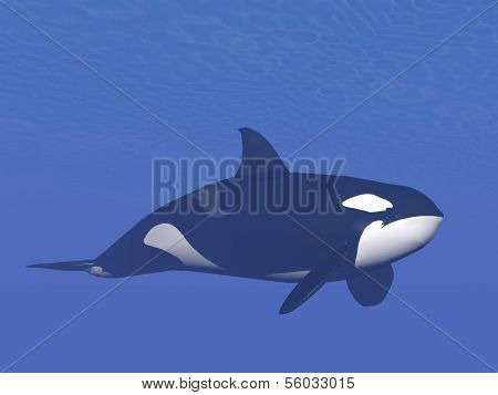 Killer whale underwater - 3D render