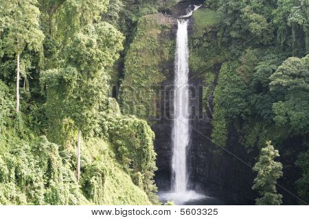 Waterfall surrounded in lush green bush