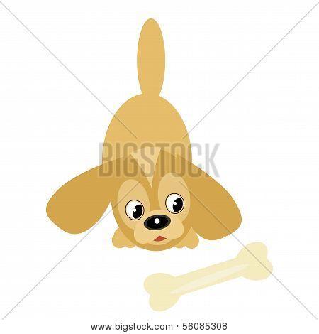 nice little dog with bone