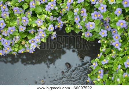 Top View Of Flower After Rain.