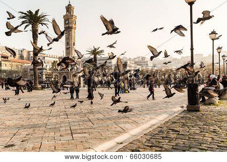 Birds In The Square