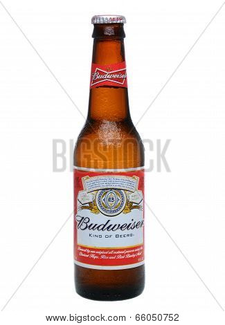 Single Budweiser Bottle With Condensation