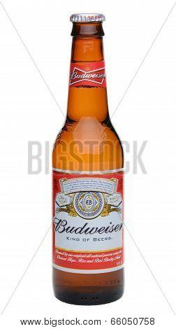 Single Budweiser Bottle