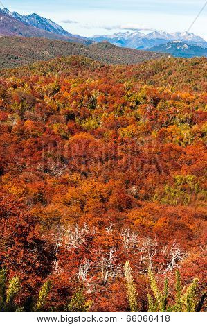 Autumn Colors Of Patagonia, Near Bariloche, Argentina