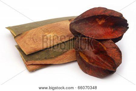 Medicinal Terminalia Arjuna