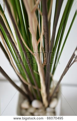 Close Up Of  Flower Limb In Pot
