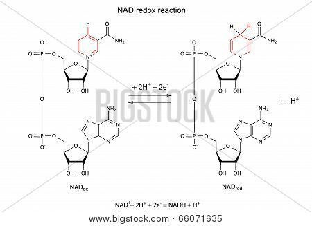Illustration Of Nad Redox Reaction With Chemical Formulas