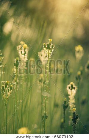 Beautiful Tender Wildflowers