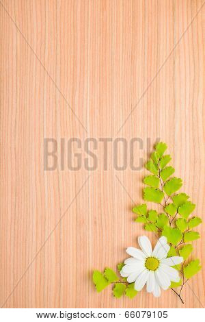 Branches Of Fern And Daisy Flower On Wooden Background