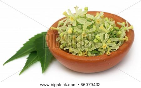 Medicinal Neem Leaves And Flower