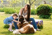 mother and child playing with dog on nature. outdoor about sander poster