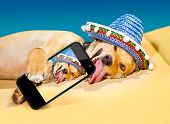 drunk chihuahua dog taking a selfie with smartphone poster