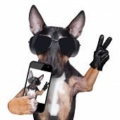 Bull Terrier taking a selfie with victory or peace fingers poster
