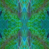 Beautiful green and blue bird feathers Harlequin Macaw feathers poster
