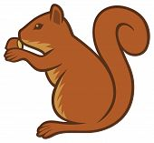squirrel with hazelnut vector illustration on white background poster
