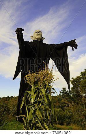 Demonic corn field