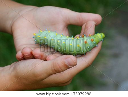 Boy holding a huge caterpillar