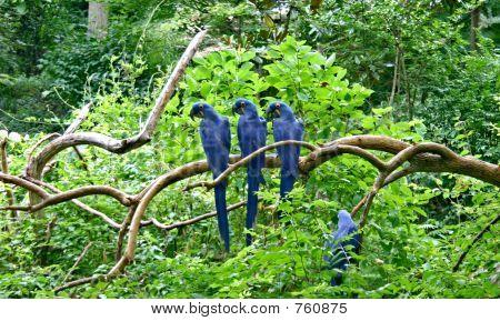 parrots posing