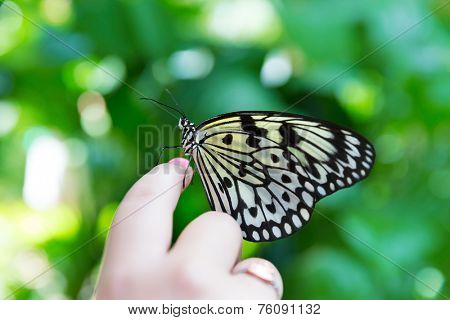 Girl hand finger Rice Paper butterfly Idea leuconoe in outdoor
