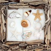 Sea shell selection and driftwood border over wooden white background. poster