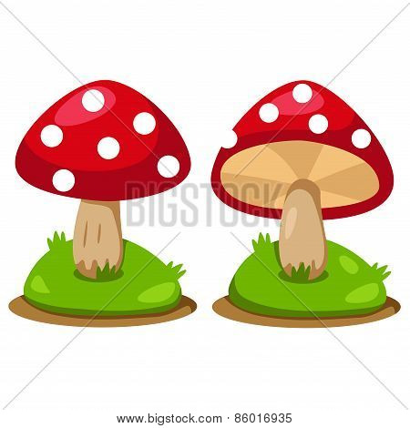 Illustrator of mushrooms
