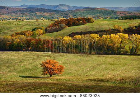 Autumn Oak Tree in colorful Nature