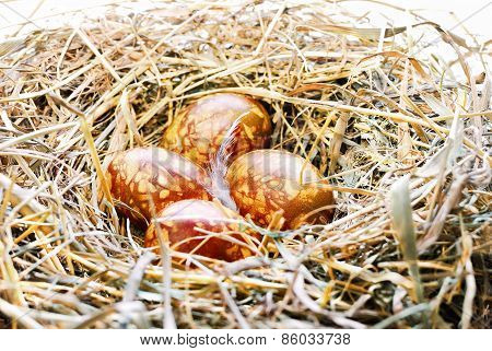 Background With Easter Eggs In Bird Nest