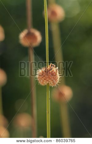 Abstract Close Up Plant
