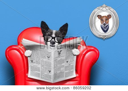 Dog Reading Newspaper