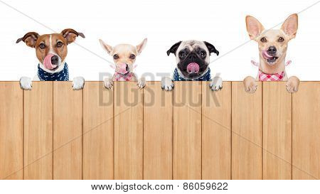Hungry Dogs