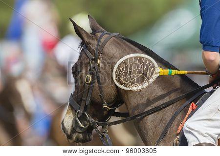 Polo-cross Equestrian Sport