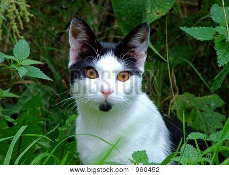Cute wide eyed black and white kitten sitting in the garden poster