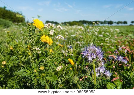 Field Edge With Colorful Wild Flowers And Plants