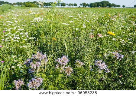 Varied Plant And Wildflowers In The Field Edge