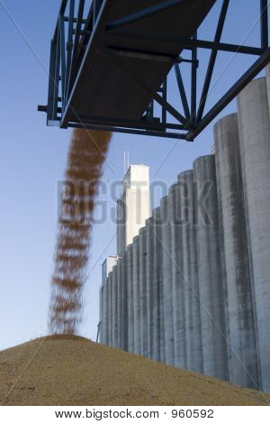 Surplus Corn At The Silo